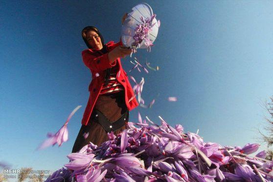 saffron-farm-iran-22.jpg